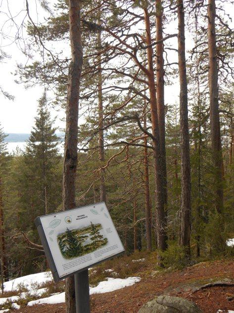 Neulamäki_kevät_2015 084