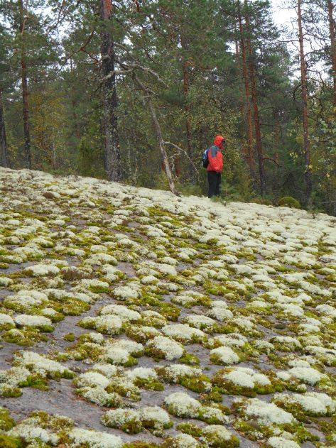 Paistjärvi_2014 081