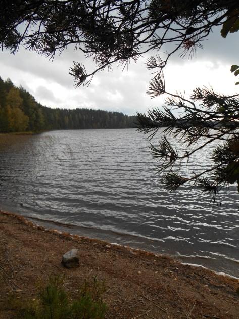 Paistjärvi_2014 094