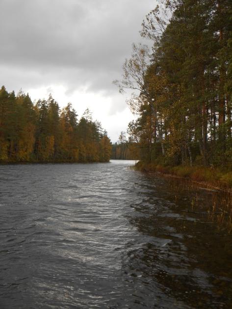 Paistjärvi_2014 153