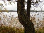 Paistjärvi_2014 164