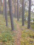 Paistjärvi_2014 168
