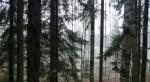 Hertsika_Hallainvuori 091