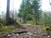 Meri-Rastilan metsät 019