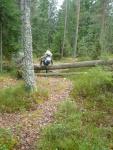 Meri-Rastilan metsät 024