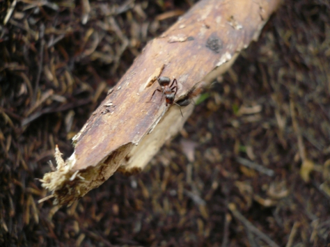Meri-Rastilan metsät 039
