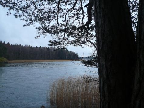 Meri-Rastilan metsät 043