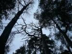 Meri-Rastilan metsät 056