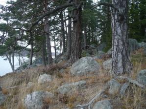 Meri-Rastilan metsät 064