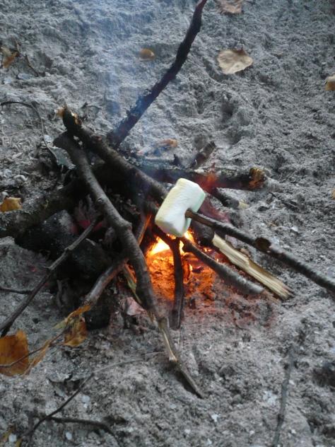 Meri-Rastilan metsät 143