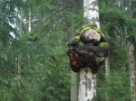 Meri-Rastilan metsät 181