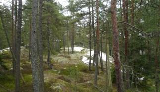 Kasakallio_Talosaari 001