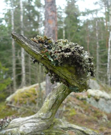Kasakallio_Talosaari 032
